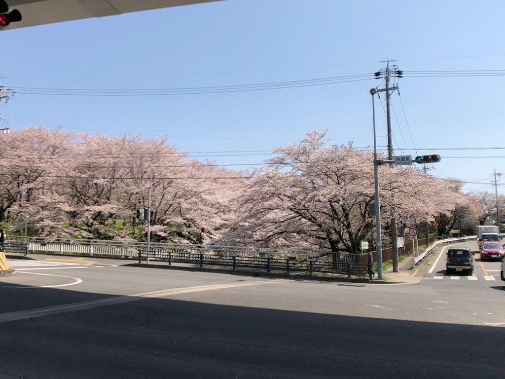 物件から車で2分の余慶橋の桜(^-^) とーっても綺麗ですよね♪ お花見に行けない忙しい方は毎日の通勤で車から見れちゃう♪